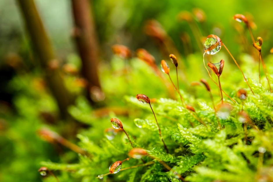 Tiny orange flower heads rise above a patch of moss