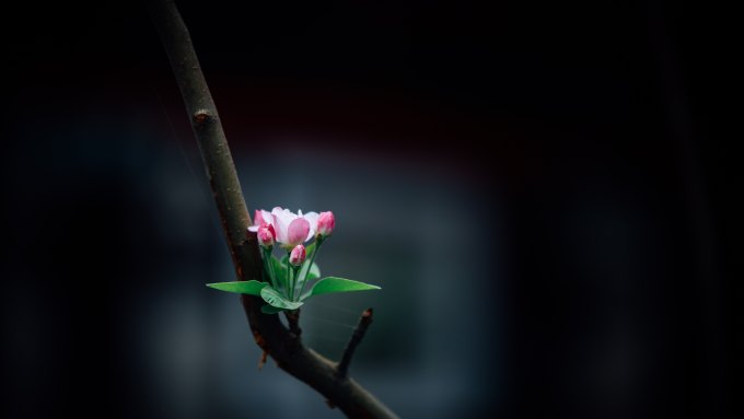 A small flower with new leaves booms on a bare branch