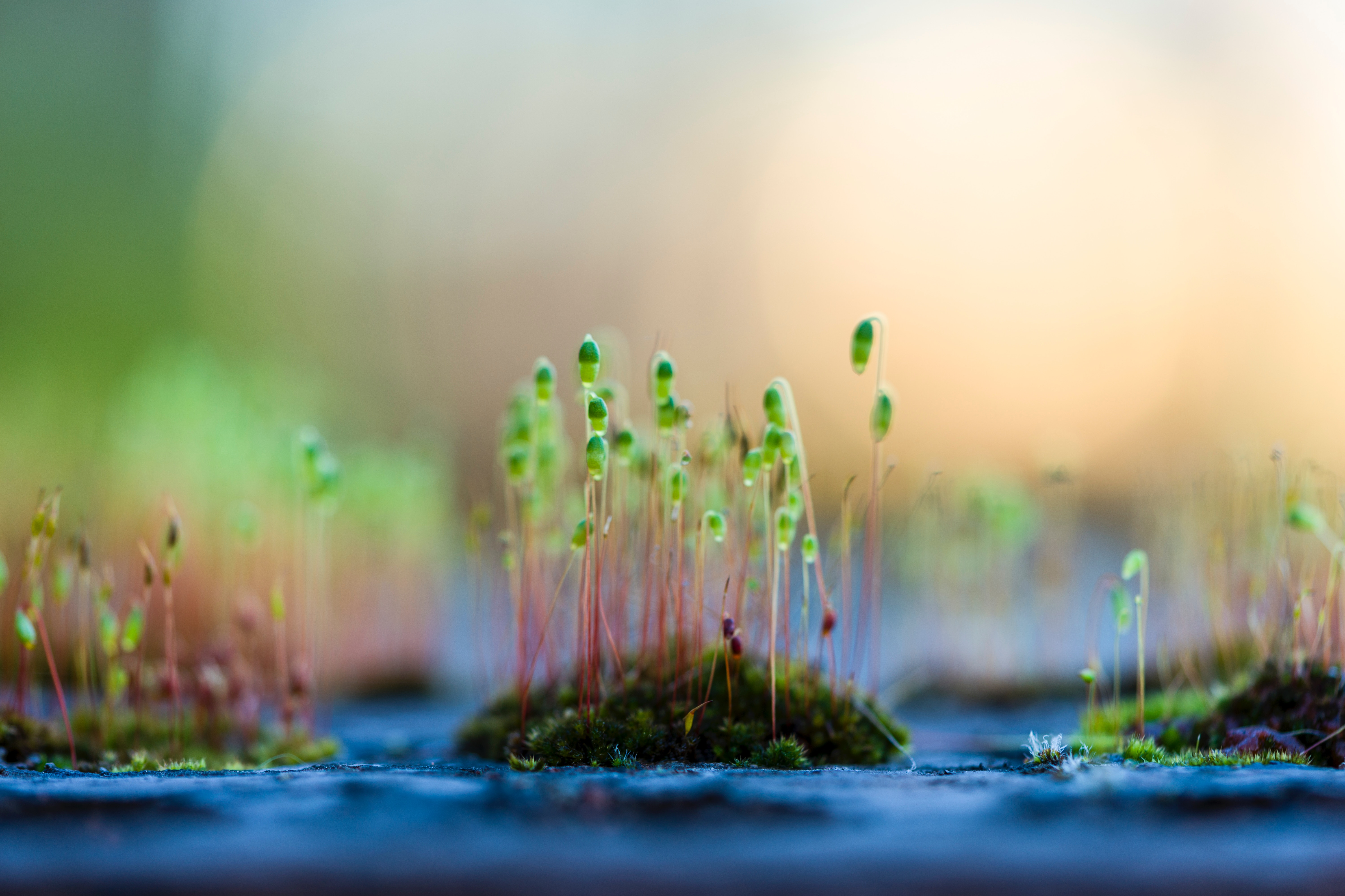 tiny seedlings grow out of patches of moss