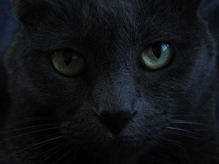 The serious face of a dark grey cat