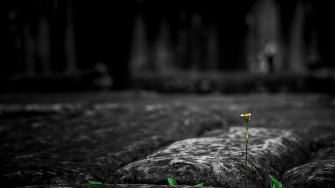 A small flower on a tall, fragile stem pokes up between old paving stones.