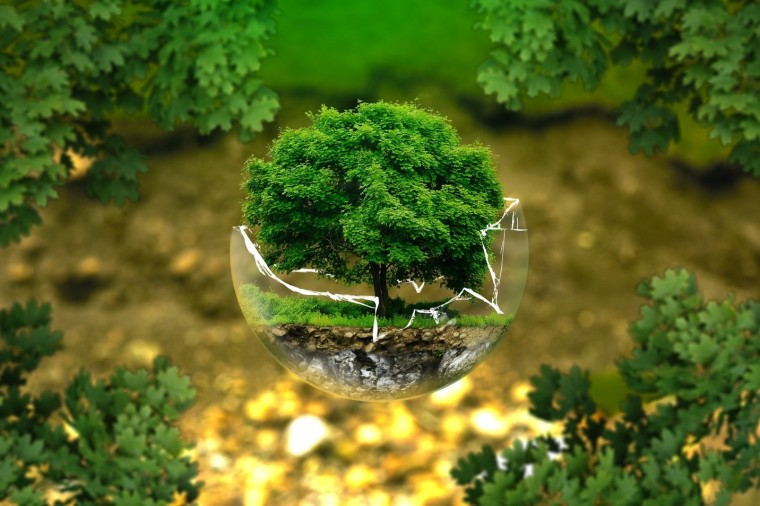 The top of a miniature tree ries out of a broken glass globe, with ful sized leaves at the corners of the image