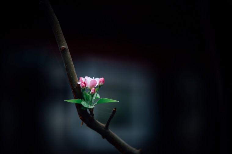 A small but complex spring blossom opens on a leafless branch